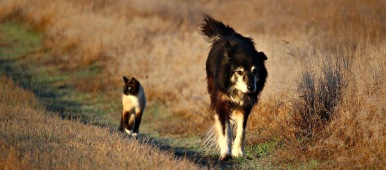 Gamme Chien & Chat